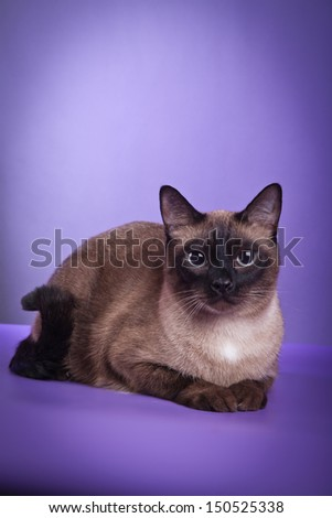 cat on a colored background