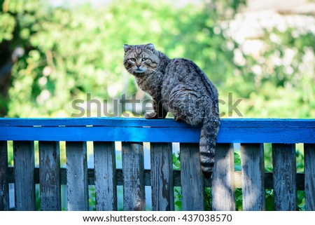 Cat on a fence staring at photographer - stock photo