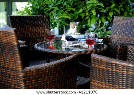 Cat on a garden table enjoing - stock photo