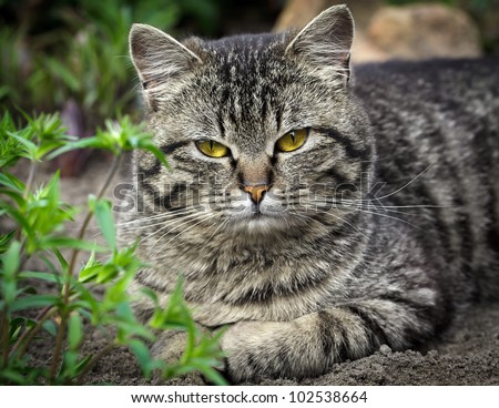 cat on a grass