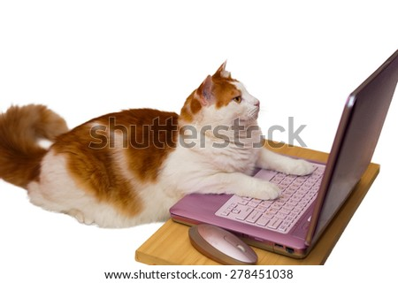 Cat on a pink computer scanned the pictures on the internet - stock photo