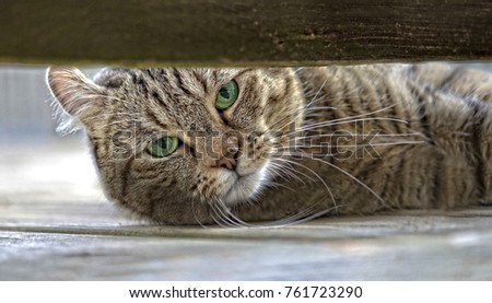 Cat on a Porch Peeking Out