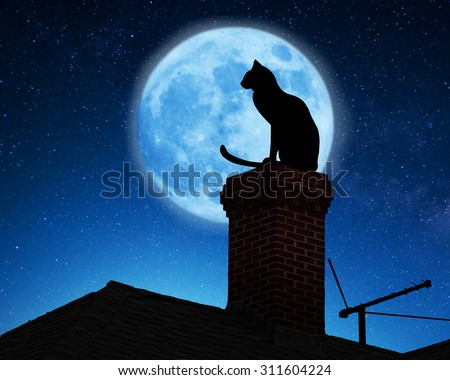 Cat on a roof. - stock photo