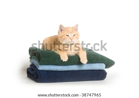 Cat on a stack of clean colorful towels