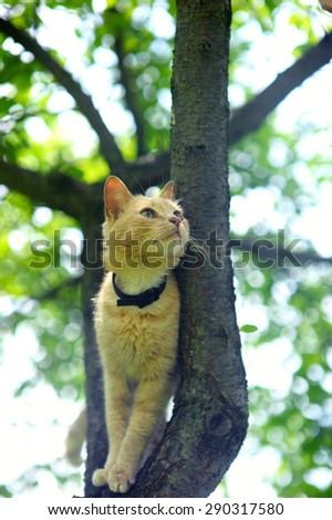 Cat on a tree - stock photo