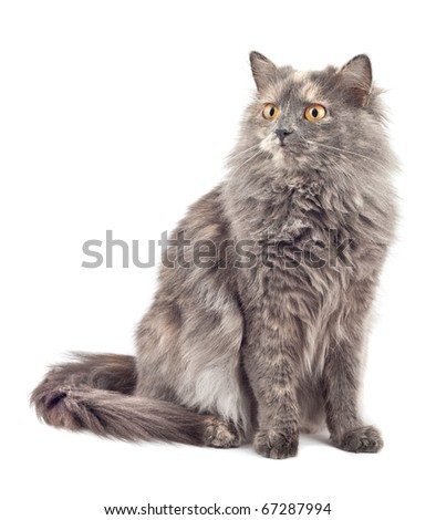 Cat on a white background. Isolated