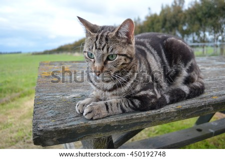 Cat on a wooden table - stock photo
