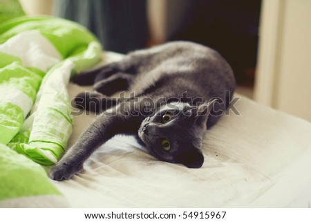 cat on bed - stock photo