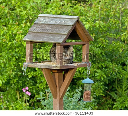 Cat on bird table - stock photo