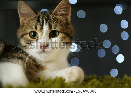 Cat on Christmas garland background - stock photo