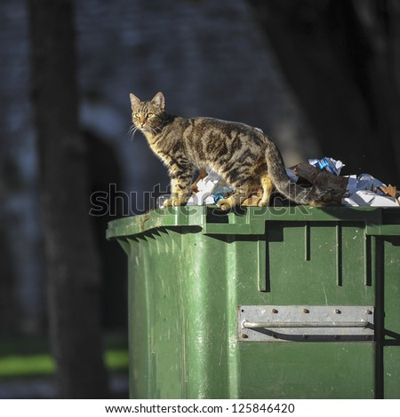 cat on container - stock photo