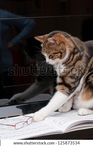 Cat on musical score with glasses - stock photo