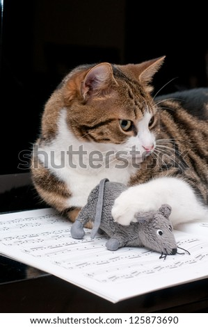 Cat on musical score with mouse - stock photo