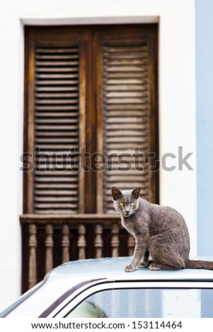 Cat on San Juan Streets - stock photo