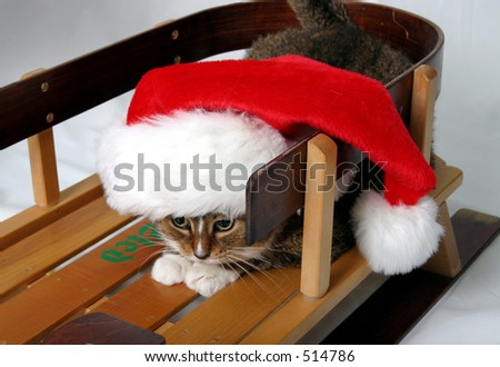 Cat on sled with Santa hat on