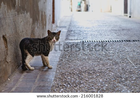 Cat on street - stock photo