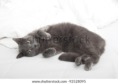 Cat on the bed - stock photo