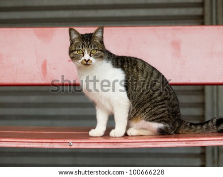 Cat on the bench - stock photo