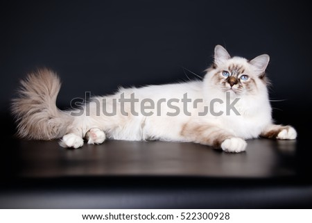 Cat on the black background
