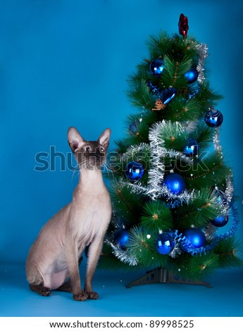 Cat on the blue background - stock photo