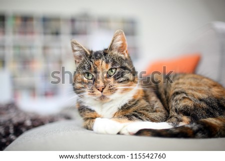 Cat on the couch in a living room - stock photo