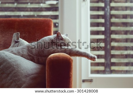 Cat on the couch, vintage filter - stock photo