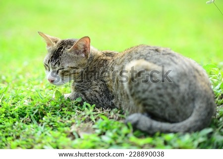 Cat on the grass - stock photo