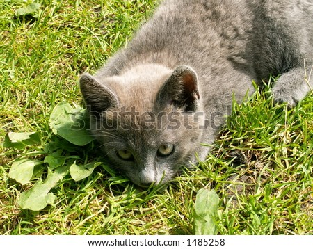 cat on the green