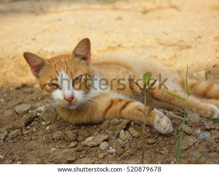 Cat on the ground