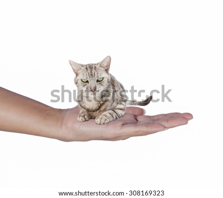 Cat on the hand.