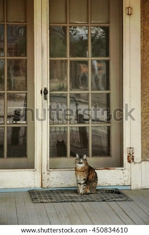 cat on the mat or a country house - stock photo