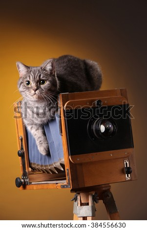 Cat on the old camera