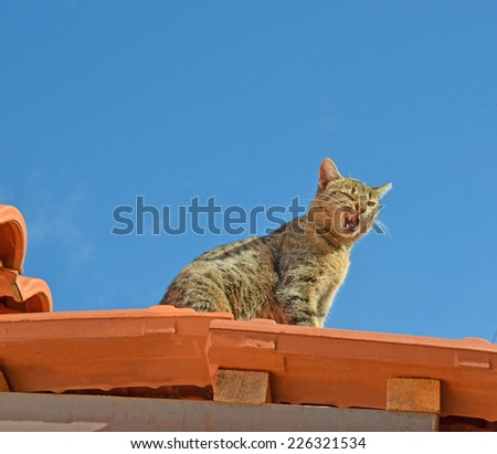 cat on the roof - open mouth - stock photo