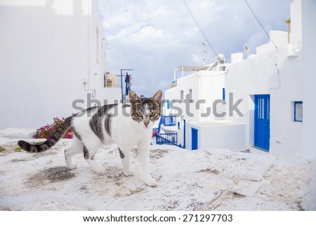 Cat on the street at Mykonos, Greece