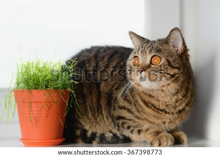 cat on the white window with grass in a pot