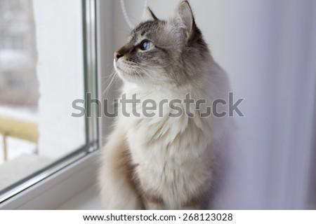 cat on the window sill - stock photo