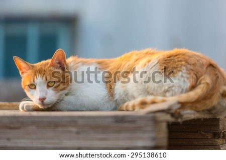 Cat on the Wooden pallets.