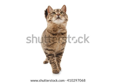 Cat on white background - stock photo