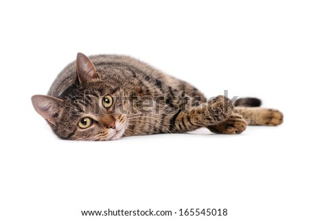 Cat on white background isolate