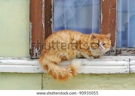 Cat on window - stock photo