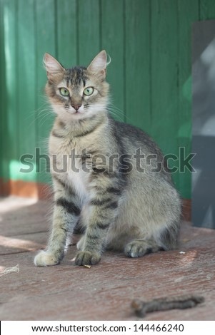Cat outside - stock photo