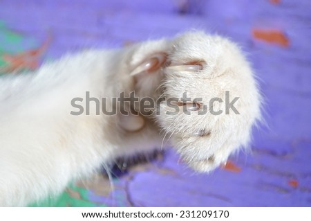 cat paw - stock photo