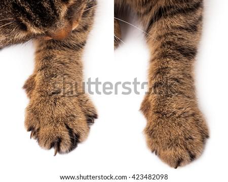 Cat paw - stock photo