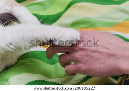 Cat paw and hand man on this photo
