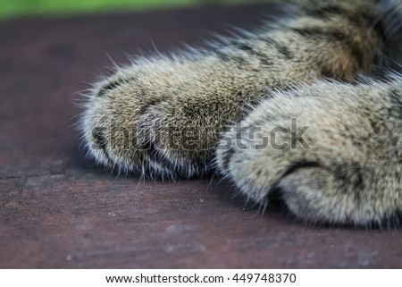 cat paw closeup on wooden background. focus on the far leg