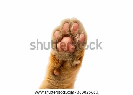 cat paw isolated on white background - stock photo