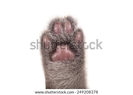 Cat paw on white background.