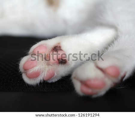 Cat paws with pink pillows - stock photo