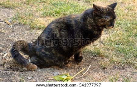 Female Cat Peeing Outside Of The Litter Box