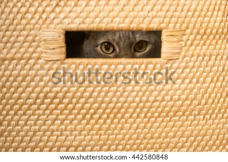 Cat peeking through a hole in a basket - stock photo